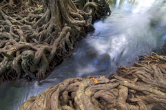 Water forest roots waterfall tree Stock Image