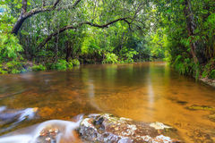 Water in forest Royalty Free Stock Photos