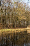 Water and forrest within the Dutch Waterloop Forrest for Hydraulic Research. The Dutch Waterloop forrest contains over thirty models used for research for Royalty Free Stock Images
