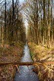 Water and forrest within the Dutch Waterloop Forrest for Hydraulic Research Stock Photography