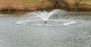 Water fountain in center of a pond stock photos