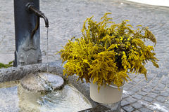 Water fountain and plant Stock Image