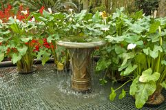 Water fountain and plants royalty free stock images