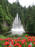 Water Fountain with Red Flowers in the Foreground. And tall trees in the background (Victoria, Canada Royalty Free Stock Images