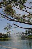 Water fountain and tree stock photos