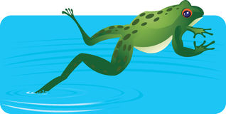 Water Frog Stock Photo