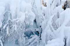 Water froze on branches. Royalty Free Stock Photography