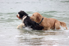 Water Fun stock images