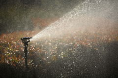 Water the garden. Automated sprinkler, watering the shrubs Royalty Free Stock Images