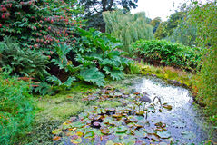 Water Garden. With pond and an artificial heron in the middle Stock Images