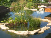 Water garden. With white stones stock photos