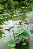 Water garden Stock Photo