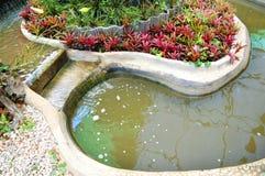 Water garden Royalty Free Stock Photo
