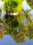 Water garden pond in September Royalty Free Stock Photos