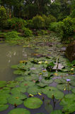 Water Garden in Taipei, Republic of China. Beautiful, lush green water garden with varieties of waterlillies. Located near the National Palace Museum stock photos