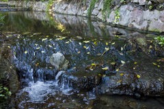 Water gently flowing over rocks Stock Image