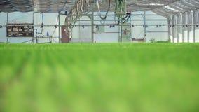Water geven van materiaal is klaar voor het werk in serre met geplante bedden stock videobeelden