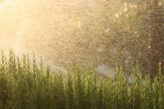 Water gevend gras Stock Afbeeldingen