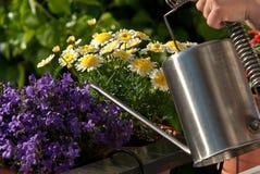Water gevende bloemen Stock Foto's