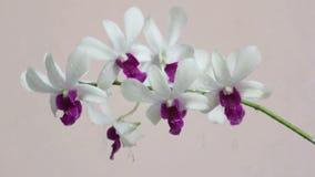 Water gevende orchideebloem stock videobeelden