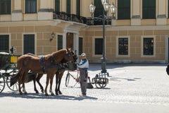 Water gevende paarden Royalty-vrije Stock Foto