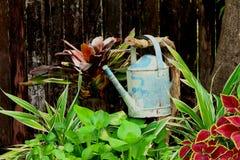 Water gevende pot Royalty-vrije Stock Afbeelding