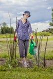 Water gevende tuin Stock Foto's