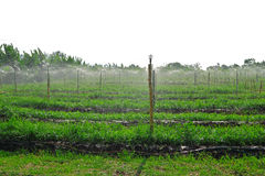 Water giver or sprinkler system in open farm Royalty Free Stock Photos