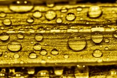 Water gold Stock Photos