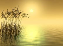 Water Grass Royalty Free Stock Photography