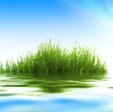 Water and grass Stock Photography