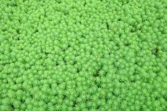 Water grass background stock photography