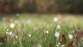 Water on grass. stock footage