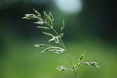 Water, Grass, Leaf, Close Up Stock Photo