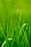 Water on grasses leaf Stock Image