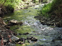 Water Green. A stream in the mountains of Cyprus Stock Images