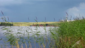 Water and green cane on summer day Royalty Free Stock Image