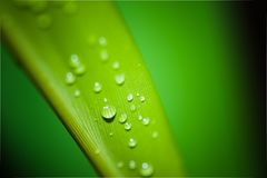 Water, Green, Dew, Drop Royalty Free Stock Images