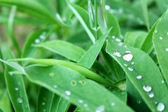 Water, Green, Dew, Leaf Stock Images