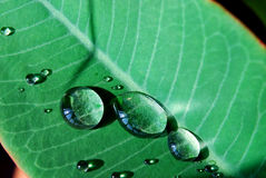 Water on the green leaf Stock Photography