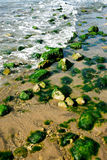Water and green stones. On an Italian beach Stock Images
