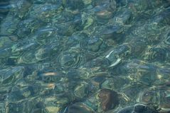 Water, Green, Underwater, Marine Biology royalty free stock images
