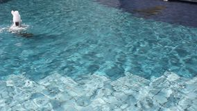 Water gushing. Decorative pool sunlight stock footage