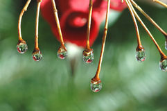 Water hanging from branches Royalty Free Stock Photography