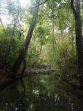 Water in het bos Royalty-vrije Stock Afbeeldingen