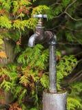 Water het gieten van een roestige tuinkraan Stock Foto