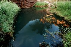 Water hole in Canyon. Water hole surrounded by green grass and eucalyptus trees of Kings Canyon in Watarrka National Park, Australian Northern Territories Stock Photos