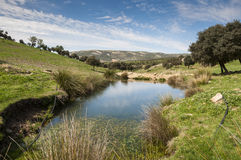 Water hole for cattle Stock Photo