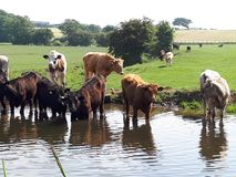 At the water hole stock photos