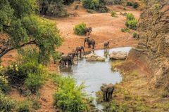 Water hole elephants national park Royalty Free Stock Photos